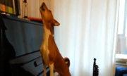 Con chó đánh đàn và 'hát' say sưa