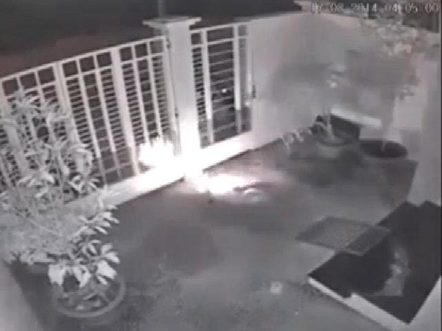 'Cẩu tặc' dùng súng điện trộm chó trong đêm