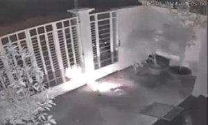 Chú chó quằn quại vì bị cẩu tặc bắn súng điện