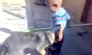 Em bé cắn lại con chó sau khi bị cắn