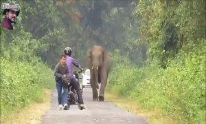 Vứt cả xe máy để chạy vì bị voi đuổi