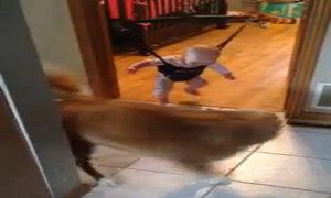 Chó kiên nhẫn dạy em bé tập nhảy