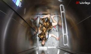 Chó lai nhện khổng lồ