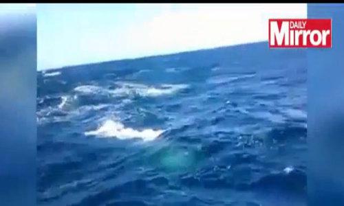 Cá nhà táng tấn công tàu đánh cá