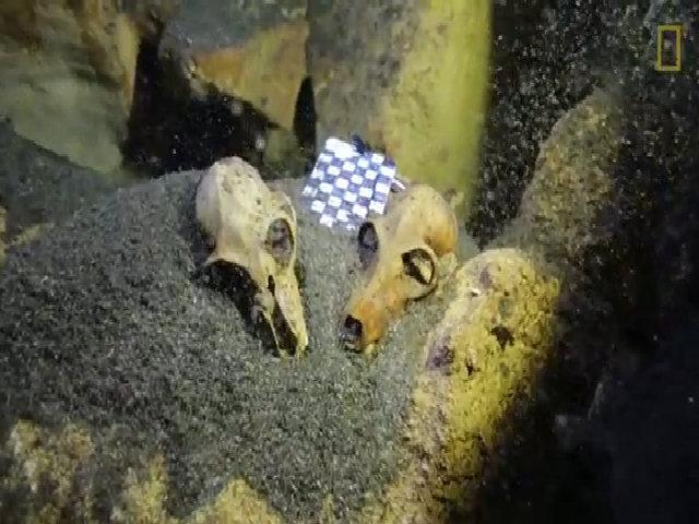 Phát hiện nghĩa trang hóa thạch khổng lồ ở dưới đáy Madagascar