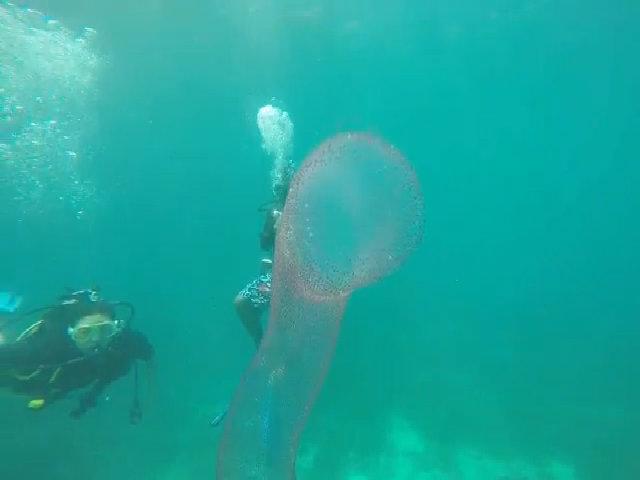Vũ điệu của sinh vật khổng lồ dưới biển