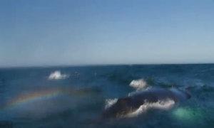 Cá voi tạo cầu vồng trên mặt biển