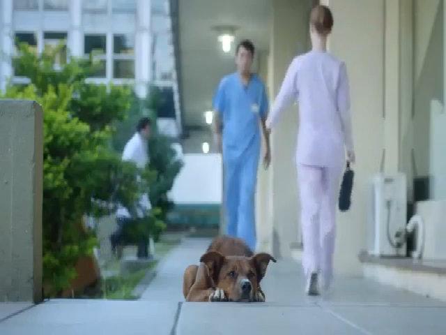 Xúc động chú chó nhận ra người được chủ hiến tạng