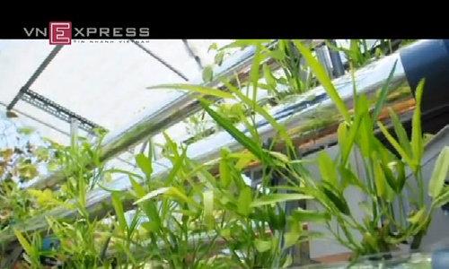 Chàng kỹ sư mê trồng rau sạch