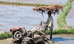 Nông dân làm dù lưu động chống nắng nóng