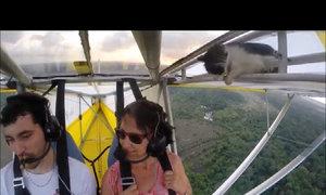 Mèo trốn lên máy bay làm phi công bất ngờ
