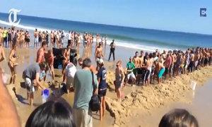 Giải cứu cá mập mắc kẹt trên cát