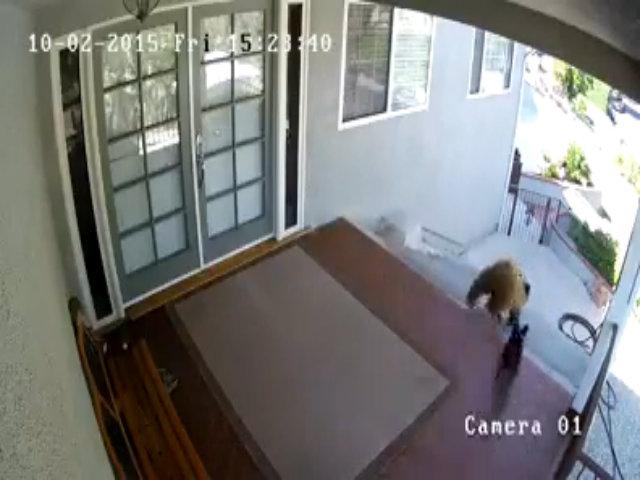 Chó đuổi gấu chạy thục mạng