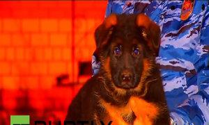 Chú cún Nga tặng Pháp để thay thế 'người hùng 4 chân'