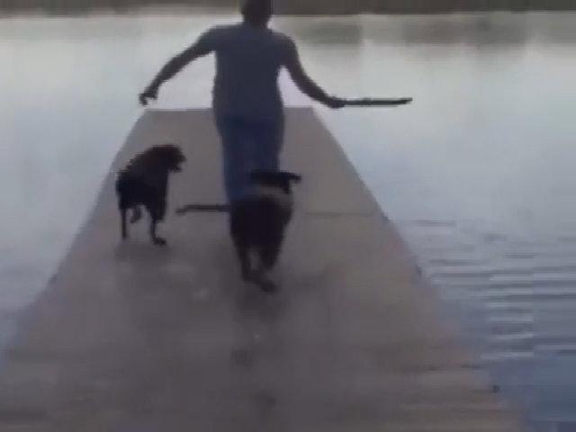 Khi cún cưng không nghe theo lời chủ