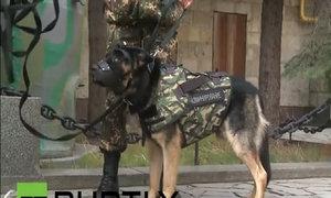Nga phát triển áo chống đạn cho cảnh khuyển