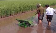 Nông dân sáng chế máy cấy tự động