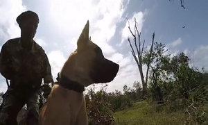Chó bắt kẻ săn trộm tê giác ở Kenya