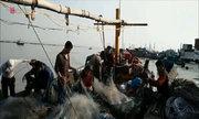 Ngư dân Hải Phòng bội thu tôm cá đầu năm mới