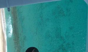 Cá mập di cư đen kịt vùng biển ấm Florida