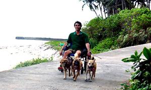 Đàn chó kéo xe cho chủ khuyết tật ở Quảng Ngãi