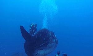 Loài cá kỳ dị có thể nặng hơn hai tấn