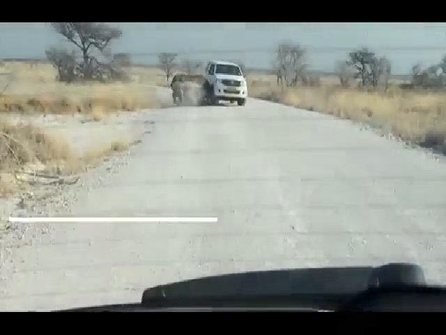 Tê giác giận dữ lao đầu húc xe chở khách