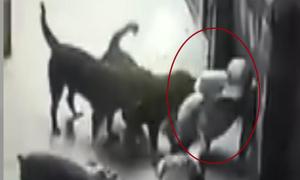 Nhân chứng kể chuyện giải cứu người đàn ông khỏi 4 con chó dữ
