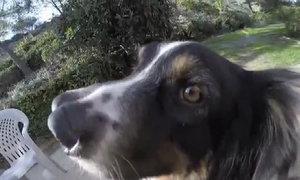 Chó hai mũi được nhận nuôi ngay trước khi bị giết