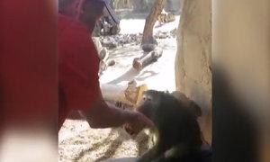 Con khỉ kinh ngạc trước trò ảo thuật