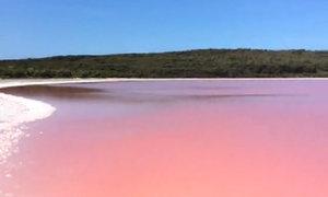 Hồ nước màu hồng sữa ở Australia