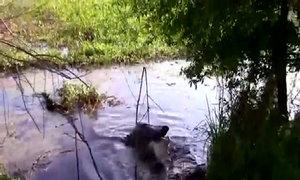 Cá sấu dài 4 m nuốt chửng đồng loại
