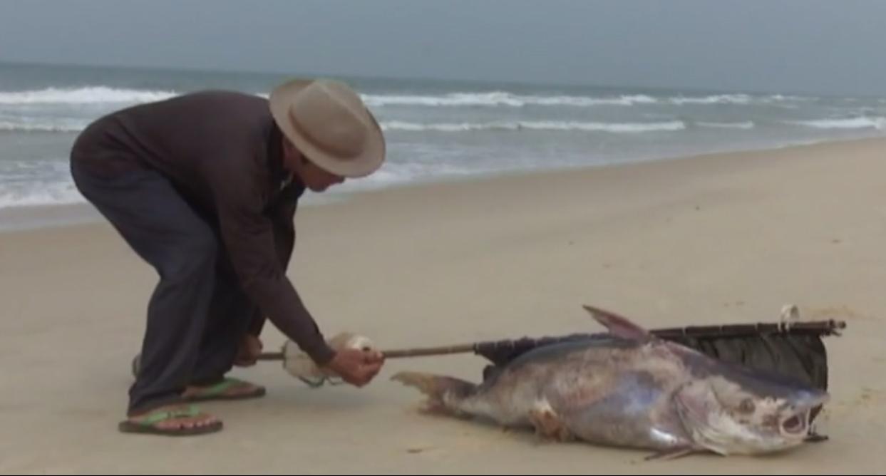 Tiểu thương ế hàng, ngư dân lo lắng trước nạn cá chết 2