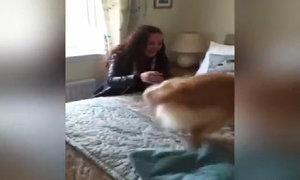 Chó đánh hơi tìm thấy chủ sau 7 tháng chia xa