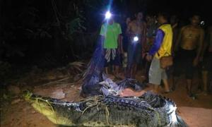 Cá sấu 300 kg bị tóm gọn sau 6 năm lẩn trốn