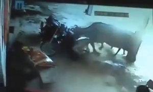 Bò lao vào cứu cô gái bị cha và bác ruột hành quyết