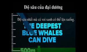 Đại dương sâu tới mức nào