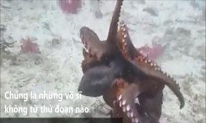 Vũ khí giúp bạch tuộc thống trị đại dương