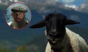 Ngẩn người với âm thanh phát ra từ chú cừu