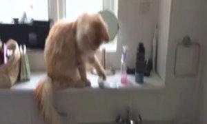 Khi mèo cố tình 'phá hoại'