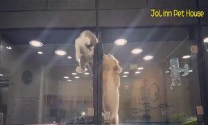 Mèo 'vượt ngục' sang chơi với chó