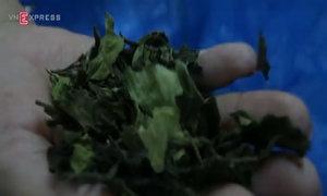 2,5 tấn thảo dược mạnh hơn ma túy đá tuồn vào Việt Nam
