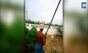 Đôi chó hợp sức cắn đứt đôi rắn 1,5 mét để cứu chủ