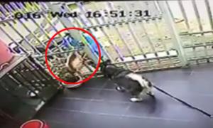 Chó Alaska chục triệu vẫy đuôi mừng rỡ khi bị ăn trộm