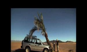 Hỏng xe giữa sa mạc vì đâm phải cây xanh