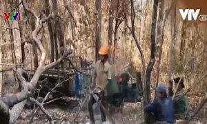 Phóng sự phá rừng ở Đắk Lắk của VTV bị cho là dàn dựng
