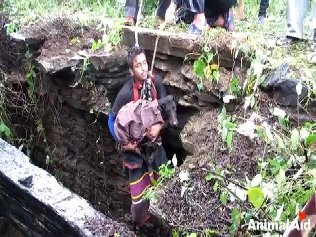 Chú chó khóc khi được giải cứu khỏi giếng sâu 15 m