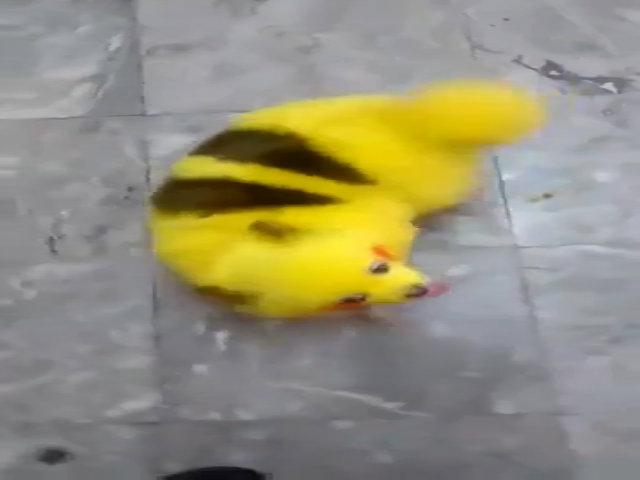 Chú chó bị nhuộm lông giống Pikachu