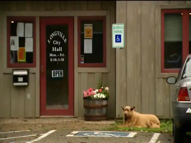 Chú chó Mỹ đi hơn 6 km mỗi ngày để 'chào hỏi' người dân