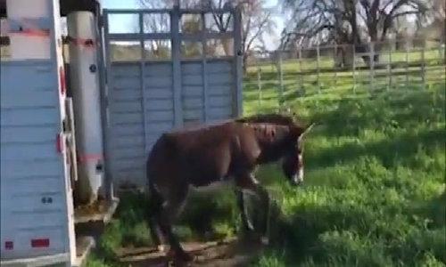 Lừa giật mình nhảy lùi lại khi lần đầu nhìn thấy cỏ tươi